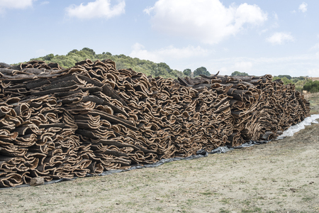 corkwood: Pile of bark from cork tree