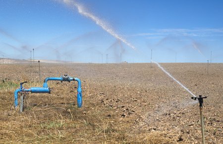 Irrigation sprayers in the field. Yellow plants Stock Photo