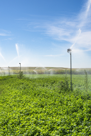 Watering sprinklers on the field. Green plants and blue sky Stock Photo