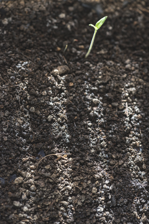 Soil and small new germ plant. Sun rays on the soil. Close up shot. Planting and growing concept.