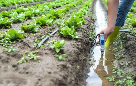 Woman mesures irrigation water with digital PH meter in watering canal. Lettuce plants.