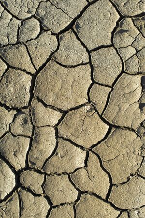 Cracked soil texture. Hard shadows and sun. Dried ground. Pattern of many cracks for background.  Stok Fotoğraf