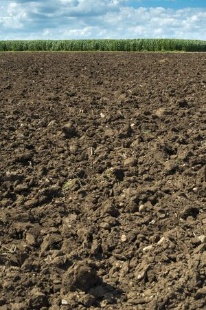 Plowed soil and plantations with corn in the background. Agriculture corn farm. Stok Fotoğraf - 133834153