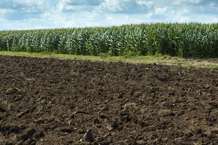 Plowed soil and plantations with corn in the background. Agriculture corn farm. Stok Fotoğraf - 133834221