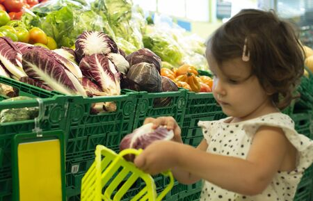 Child shopping radicchio in supermarket. Concept for buying  vegetables in hypermarket. Little girl hold shopping basket.
