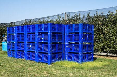 Big blue crates in apple orchard. Picking apples in industrial farm. Concept for growing and harvesting apples. Standard-Bild
