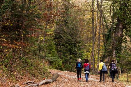 Vier vrouwen die een wandeling in het bos