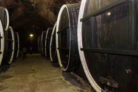 Old wine cellar in Ilok, Croatia, with old oak barrels on display; a must see tourist attraction in Baranja region of Croatia