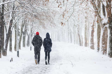 wintery day: Couple walking during heavy snowstorm on the alley under the trees