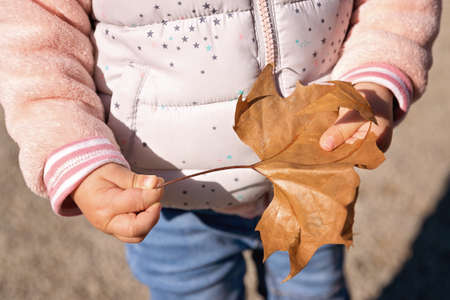 One and a half year old baby gir holding the leaf fallen from the tree