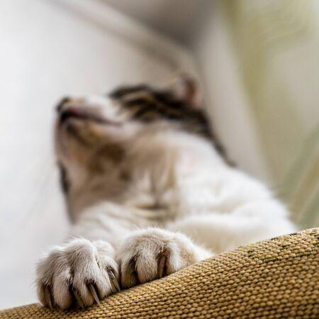 Claws Cat