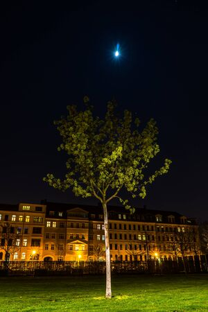 Young tree and the moon, Lene Voigt Park, Leipzig, Germany Stock fotó