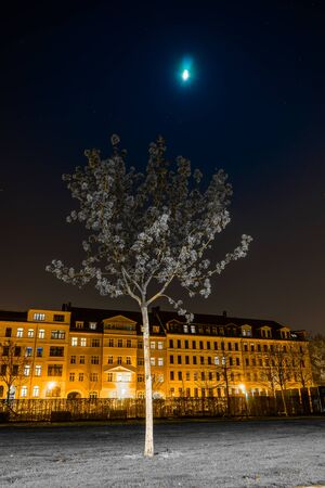 Young tree with gray leaves and the moon, Lene Voigt Park, Leipzig, Germany Stock fotó - 57244443