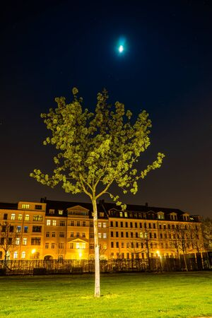 leipzig: Young tree and the moon, Lene Voigt Park, Leipzig, Germany Stock Photo
