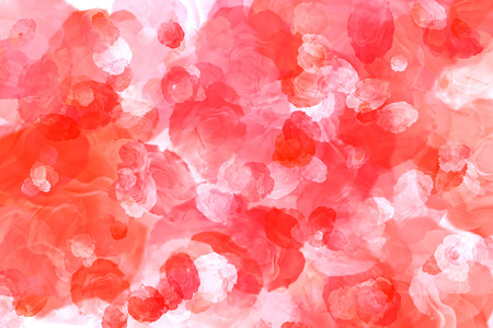 Natural red roses on the best background
