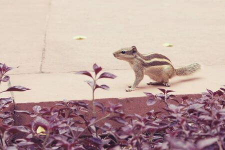 thrifty: Little squirrel sitting next to flowers. Squirrel with a stripe on the back.