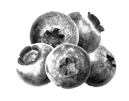 whortleberry: Juicy and fresh blueberries without green leaves on white background. Blue color blueberries close-up. Image of blueberries with high resolution. Drawing sketch painting blueberry Illustration