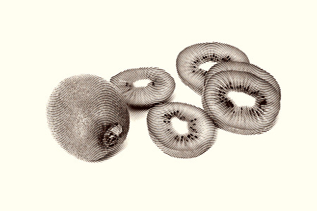 Sketch painting Kiwi Fruit and his Sliced Segments Isolated on White Background Black and white