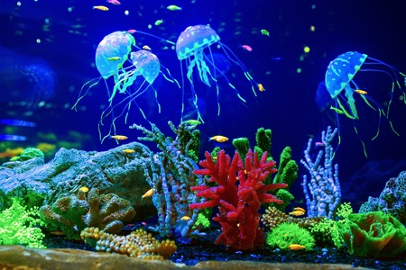 Beautiful jellyfish, medusa in the neon light with the fishes 版權商用圖片