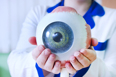 Ophthalmology oculus sample closeup. Ophthalmology, eye model close-up. The ophthalmologist is holding a model of the eye. Stock Photo