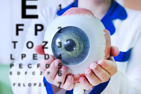 exemplar: Ophthalmology oculus sample closeup. Ophthalmology, eye model close-up. The ophthalmologist is holding a model of the eye. Chart test for ophthalmologist doctor