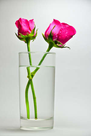A rose in a glass of water on a white background.