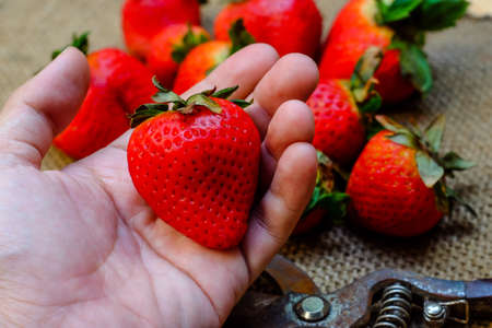 Handful of strawberries on nature background