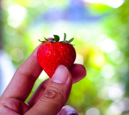 Handful of strawberries on nature background, The Sun, the sun shines from behind Stock Photo