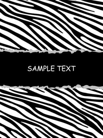 zebra print: Zebra background Illustration