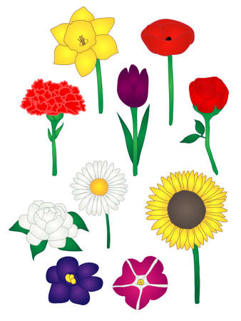 Ten Common Flowers Illustration Vector