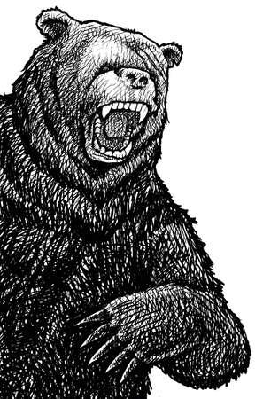 angry bear: Dibujo en blanco y negro de un oso muy enojado