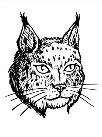 An original vector sketch of lynx Illustration