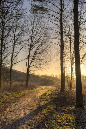 clearing the path: A path exits the forest towards the rising sun