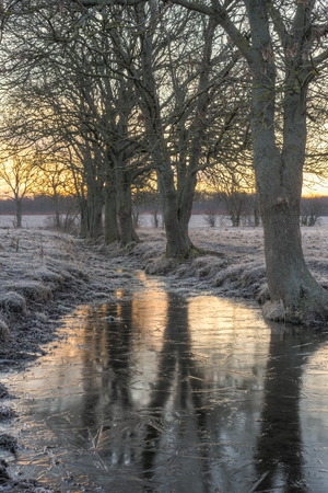 A frozen puddle by a line of trees in which the tree are casting their reflection   photo
