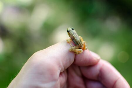 tiny frog: A tiny frog sitting on a thumb