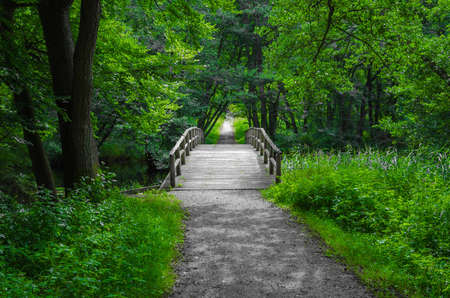 Old charming and romantic wooden bridge over a creek in the middle of the forest