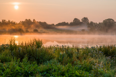 uncontrolled: Uncontrolled wild vegetation by a lake  The sun is rising and the wildlife is active  Stock Photo