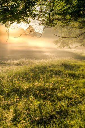 Light shining through the morning mist on a meadow