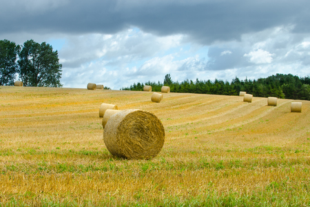 Bales of straw Stock Photo