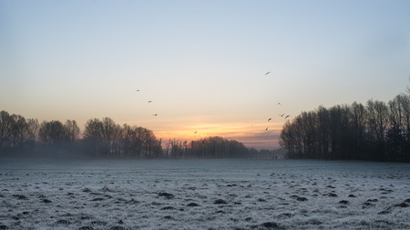 Hundreds of molehills in the grass covered with hoar frost and birds in silhouette against the light of dawn