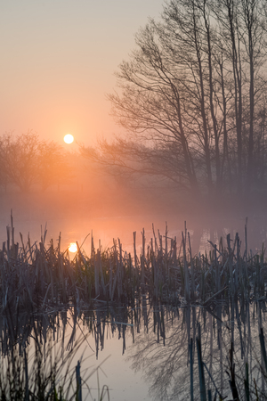 Sunrise over a small pond with broken rush and reed Stock Photo