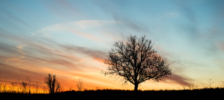 Single tree silhouette against colorful dawning sky