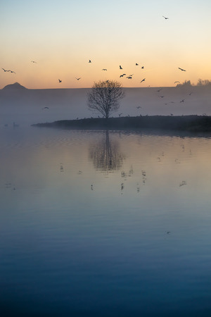 Single tree and tiny island and birds silhouette against the dawning sky. Stock Photo