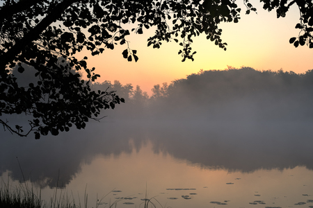 dawning: Silhouette leaves framing a lake and trees background with light from the dawning sky. Stock Photo