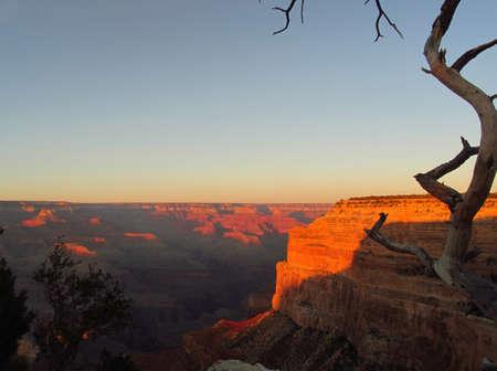 twisted tree at sunset at grand canyon,usa