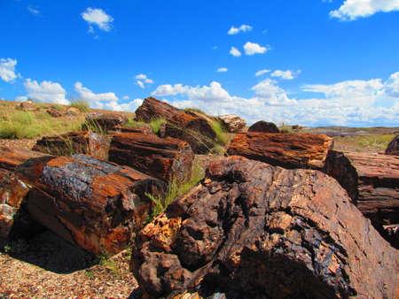 petrified: Unreal Petrified woods,Petrified Forest,Arizona,Usa Stock Photo