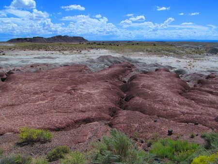 petrified: Petrified Forest,Arizona,Usa,