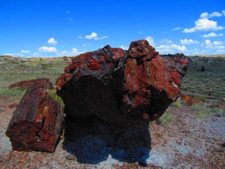 petrified: Petrified Forest ,Arizona