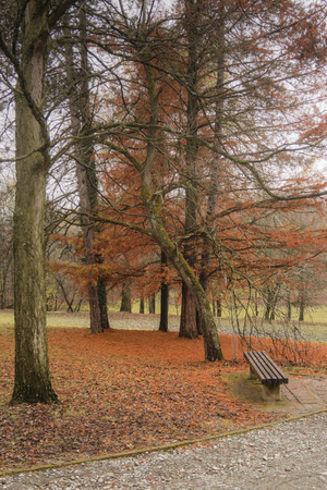 The coniferous tree in the autumn gets a park with a bench Stock fotó