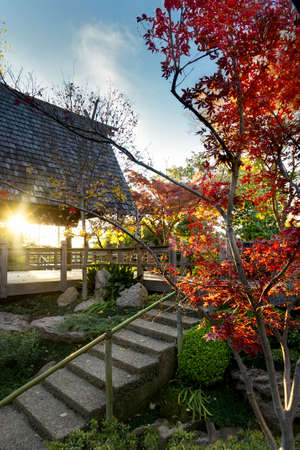 fort worth: Multicolored fall foliage in the Fort Worth Japanese Gardens